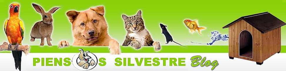 Blog de Piensos Silvestre
