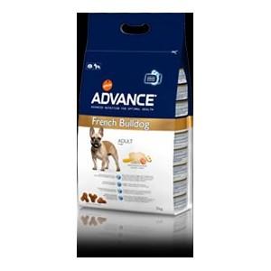 Advance French Bulldog