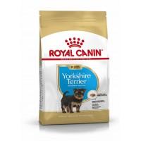 BHN Yorkshire Puppy 7,5kg